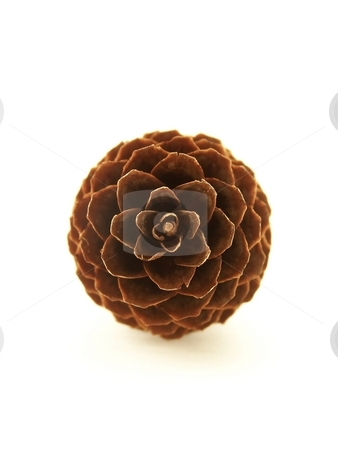 Pinecone stock photo, Vertical image of a single pinecone viewed straight on, centered in the frame. by Jill Oliver