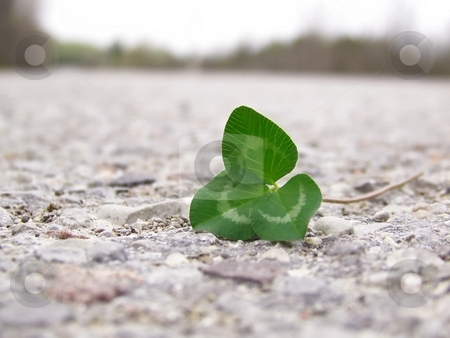 Clover on Road stock photo, Image of bright green clover on a grey road, with line of dark trees in background. by Jill Oliver