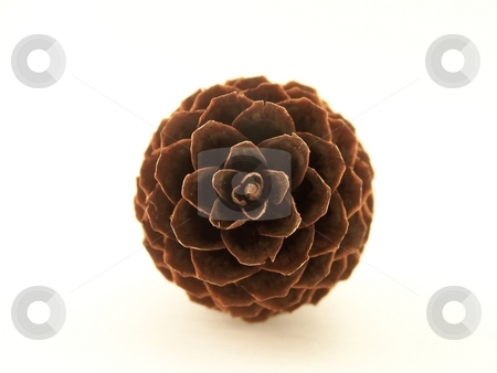 Pinecone stock photo, Image of a single pine cone, viewed head on and centered in frame. by Jill Oliver