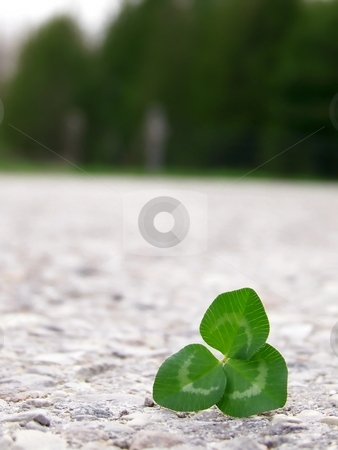 Clover on Road stock photo, Image of bright green clover on grey road. by Jill Oliver