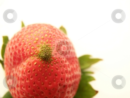 Strawberry stock photo, Image of a bright red strawberry, turned upside down,!  White background and horizontal orientation. by Jill Oliver