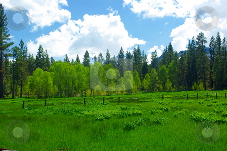 Spring Sierra Meadow stock photo, A sierra meadow boardered by Aspens and Pines. by Lynn Bendickson