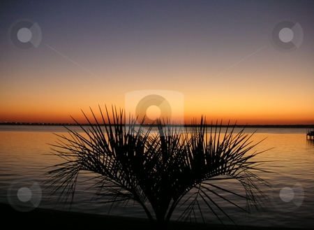 Silhouted Palm Tree on River stock photo, A silhouted miniature palm tree along the St. John's River by Caley Gonyea