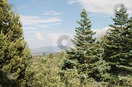 Trees overlooking Valley stock photo, Trees in the Sandia Mountains of New Mexico overlooking the valley below. by Caley Gonyea