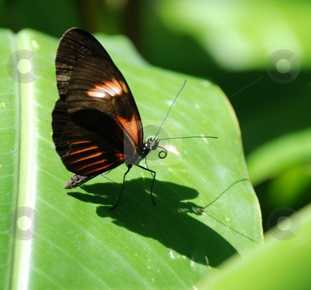 Butterfly on Leaf stock photo, A butterfly resting on a leaf. by Caley Gonyea