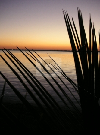 Silhouted Palm Leaves on River stock photo, A close up of a the leaves of a silhouted miniature palm tree along the St. John's River by Caley Gonyea