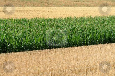 Fields stock photo,  by Wolfgang Heidasch