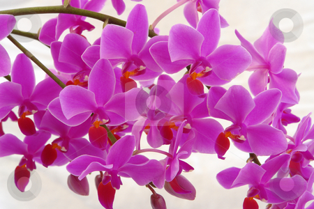 Orchidee stock photo, Orchidee by Wolfgang Heidasch