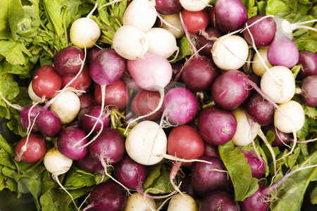 Colorful Radishes stock photo, Red, white and magenta radishes on a bed of leafy greens by Scott Griessel