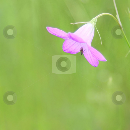 Pink flower stock photo, A photography of a beautiful pink flower by Markus Gann