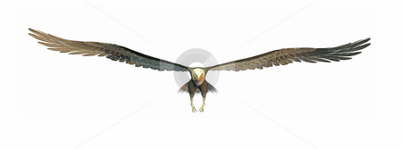 Flying eagle stock photo, A illustration of a big flying eagle by Markus Gann