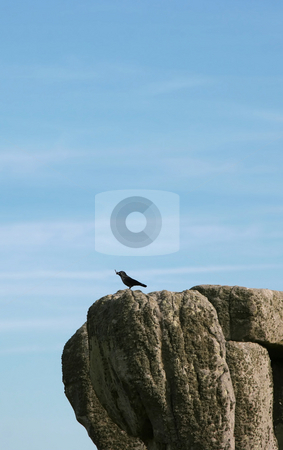 Lonely bird stock photo, A Photograph of a lonely bird sitting on a rock by Markus Gann