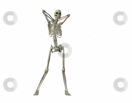 Skeleton stock photo, A illustration of a skeleton on a white background by Markus Gann
