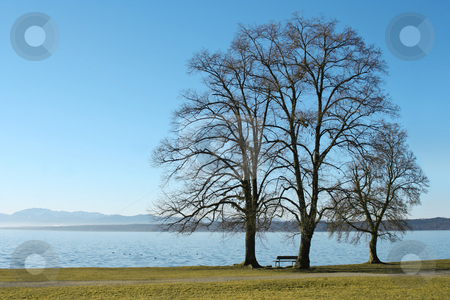 3 trees at the lake stock photo, Three trees at the lake Starnberg in Bavaria, Germany by Markus Gann