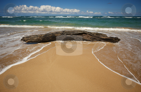 Driftwood in surf on beach stock photo, Inviting Tropical Shoreline and Large Driftwood on the Kauai coast by Andy Dean