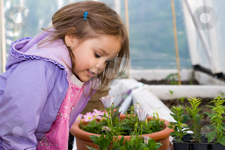Curious stock photo, Little girl in greenhouse smelling a flower. by Richard Nelson