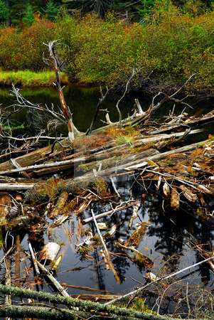 Driftwood in a river stock photo, Driftwood in a forest river in Algonquin provincial park, Canada by Elena Elisseeva