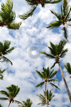 Palm trees stock photo, Tropical background of palm tree tops with blue sky by Elena Elisseeva