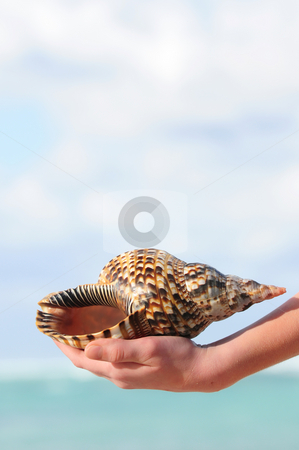 Seashell in hand stock photo, A hand holding a large seashell on tropical beach background by Elena Elisseeva
