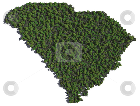 South Carolina in Trees stock photo, The shape of South Carolina grown in trees. by Allan Tooley