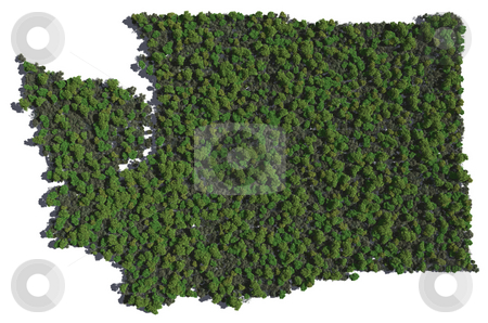 Washington in Trees stock photo, The shape of Washington grown in trees. by Allan Tooley