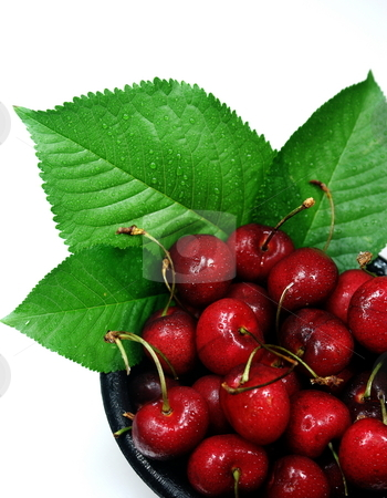 Fresh Cherries With Leaves stock photo, Just picked cherries displayed in a black bowl with cherry leaves. by Lynn Bendickson