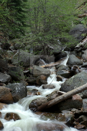 Mountain Stream stock photo, Clear mountain stream flowing through the forest by Lynn Bendickson