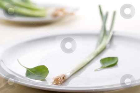 High key green onion on a plate stock photo, High key green onion on a plate with shallow focus by Vince Clements