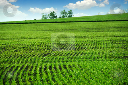Green farm field stock photo, Green farm field in spring by Elena Elisseeva