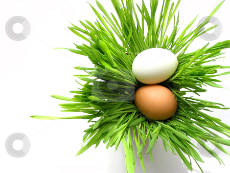 Easter eggs in grass on white stock photo, Easter eggs in green fresh grass isolated on white background by Elena Elisseeva