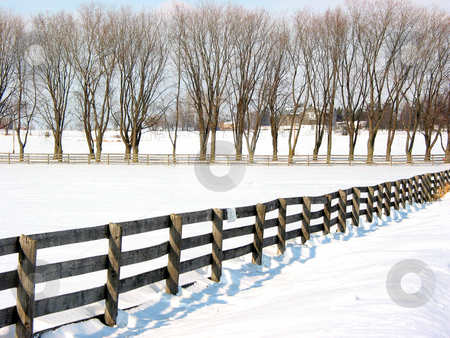 Farm fence and trees 1 stock photo, Farm fence and trees in the lane in the winter by Elena Elisseeva