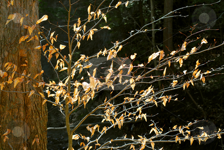 Late fall stock photo, Forest in late fall with backlit dry leaves by Elena Elisseeva