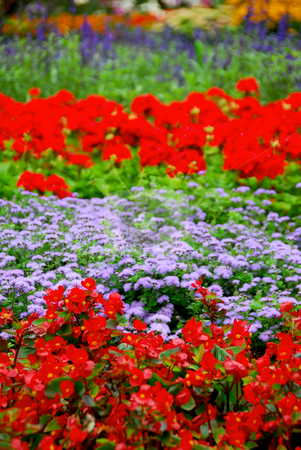 Blooming garden stock photo, Colorful blooming flower garden with assorted flowers by Elena Elisseeva