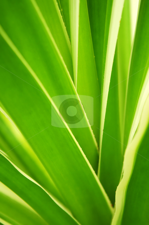 Tropical leaves stock photo, Closeup on green leaves of tropical plant by Elena Elisseeva