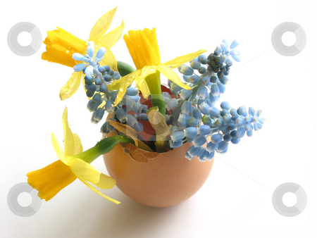 Happy easter stock photo, Easter arrangement: Spring flowers in egg shell on white background by Elena Elisseeva