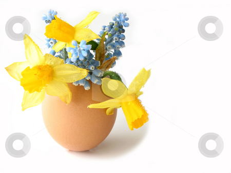 Easter shell stock photo, Easter arrangement: Spring flowers in egg shell on white background, space for copy by Elena Elisseeva