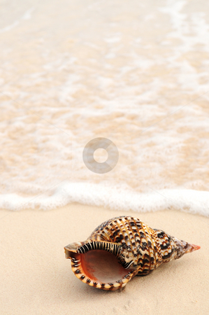 Seashell and ocean wave stock photo, Seashell in front of foaming ocean wave on sandy tropical beach by Elena Elisseeva
