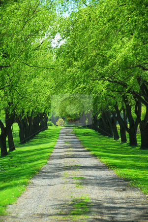 Green tree lane stock photo, Lane of bright green summer trees moving with breeze by Elena Elisseeva