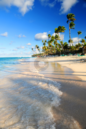 Tropical beach stock photo, Tropical sandy beach with palm trees in Dominican republic by Elena Elisseeva