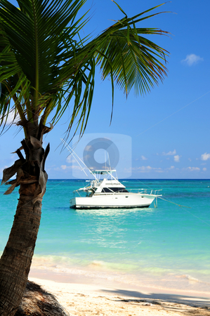 Tropical beach stock photo, Palm tree and fishing boat at tropical beach by Elena Elisseeva