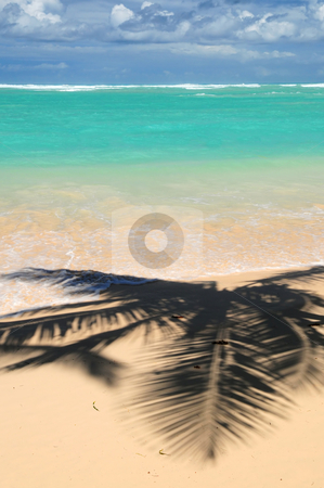 Tropical beach stock photo, Pristine tropical beach with palm trees shadows on Caribbean island. Colors are natural. by Elena Elisseeva