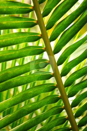 Tropical leaf stock photo, Closeup of green leaf of tropical plant by Elena Elisseeva
