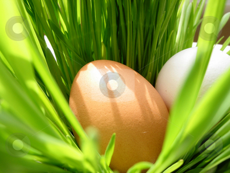 Easter eggs in grass stock photo, Easter eggs in very bright green fresh grass by Elena Elisseeva