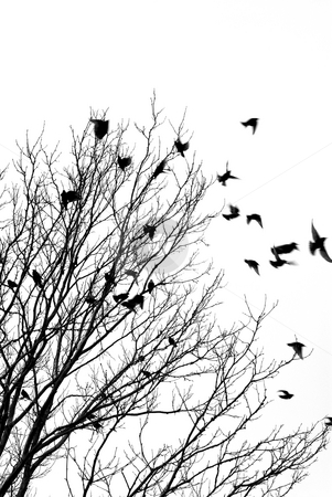 Flying birds stock photo, Black and white image of birds flying off a tree by Elena Elisseeva