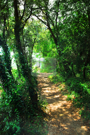Forest path stock photo, Hiking trail in a sunlit forest in southern France by Elena Elisseeva