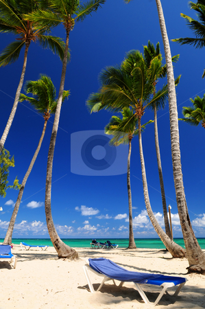 Sandy beach on Caribbean resort stock photo, Sandy beach on Caribbean resort with tall palm trees by Elena Elisseeva