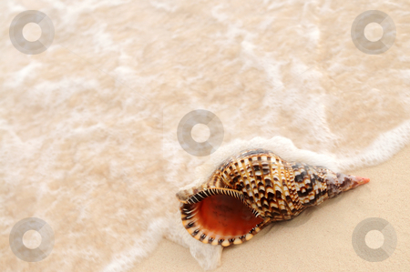 Seashell getting hit by ocean wave stock photo, Seashell and ocean wave on sandy tropical beach by Elena Elisseeva