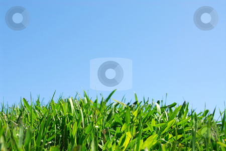 Grass and sky stock photo, Grass and sky background by Elena Elisseeva