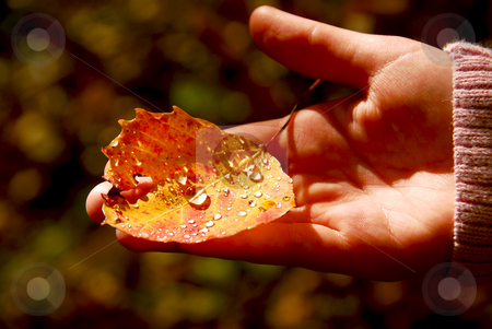 Hand fall leaf stock photo, Child's hand holding fall aspen leaf with sparkling water drops by Elena Elisseeva