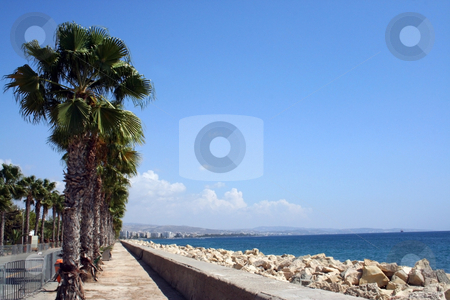 Palm Trees in Cyprus stock photo, Palm tree lined shoreline on island of Cyprus. by Martin Crowdy